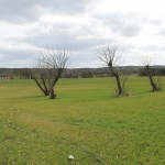Åben mark med træer i bedste Storm P. stil