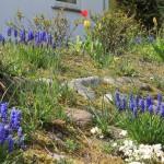 Forårsstemning og smukke farver i en forhave i Nysum
