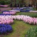 Fra blomsterparken Keukenhof