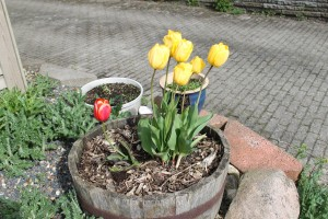 Foråret er også nået til St. Binderup