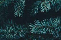 jul i nordjylland