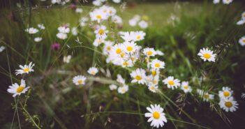 sommer i nordjylland